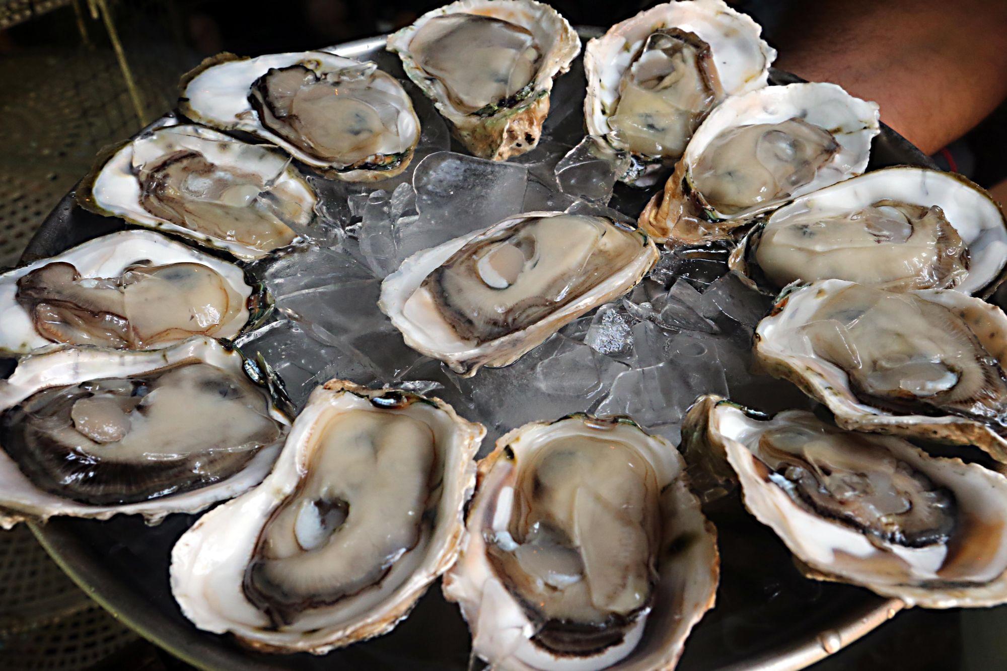 Onde comer ostras no litoral do Paraná