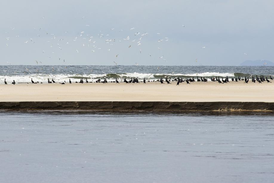 Barra do Saí: a última e a mais tranquila praia do litoral do Paraná