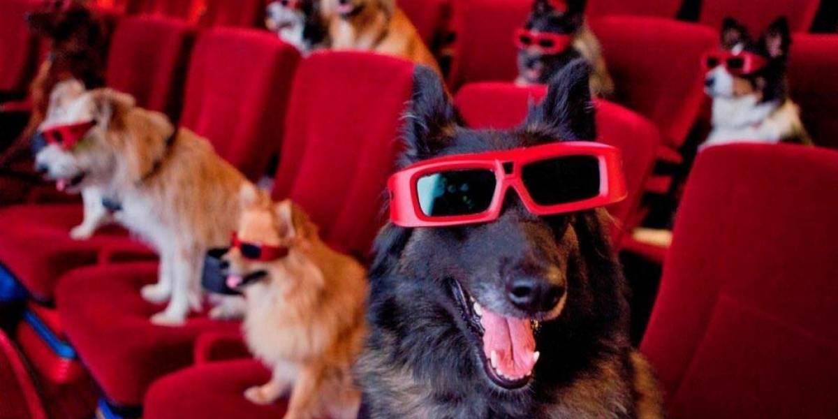 Primeiro festival de cinema a céu aberto pet friendly será em Curitiba