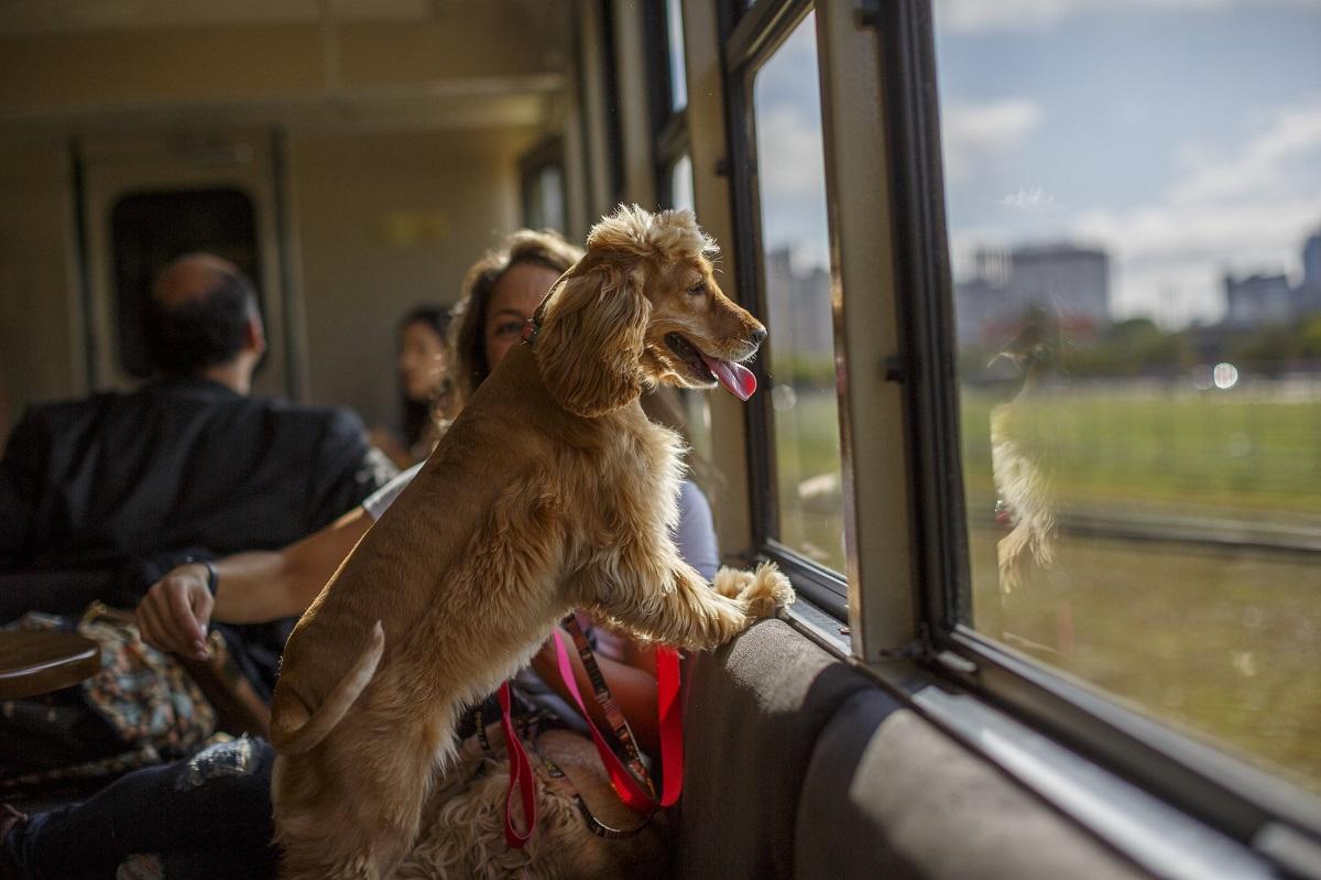 Cãezinhos no trem: conheça o primeiro vagão pet friendly do Brasil