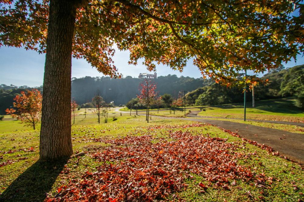 5 lugares para tirar fotos bonitas no outono