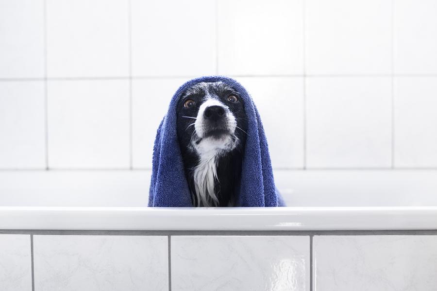 Lugares para levar seu pet tomar banho com desconto