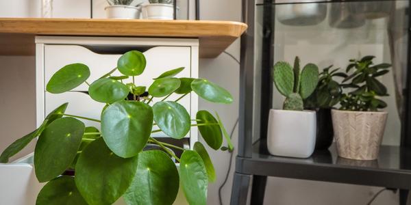 Urban jungle: seis plantas fáceis para cultivar em casa